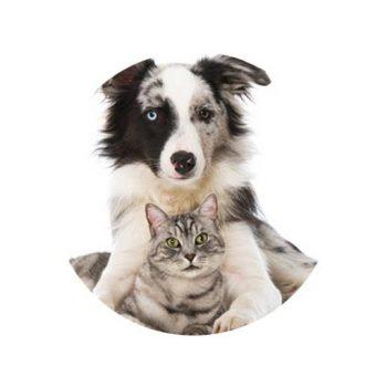 hund_katz_512x512